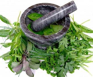 Čerstvé bylinky jsou výchozí surovinou pro celou řadu fytofarmak.