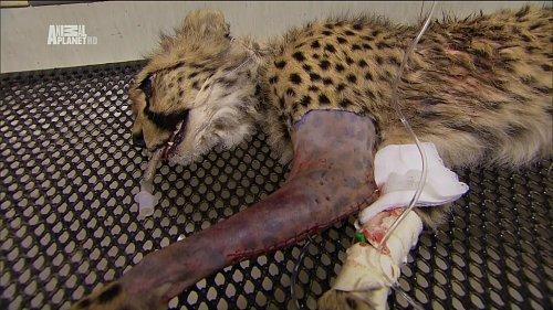 Ukázka z vysílání dokumentárního kanálu Animal Planet HD