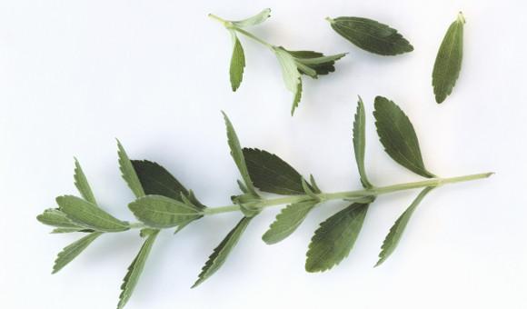 Ať už jsou listy čerstvé, zmrazené nebo sušené, zachovávají si obsah steviosidů, tedy svou sladivost