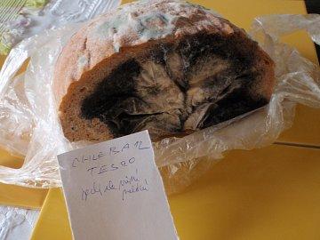 Propadák testu, jeden ze dvou konzumních chlebů z tesco, při otevření pytlíku. Původně byl při koupi jedlý, ale nevoněl, jak ukazuje popiska ze zahájení testu.