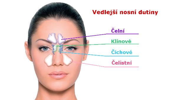 Výsledek obrázku pro vedlejší dutiny nosní