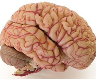 Foto: http://www.scientificamerican.com