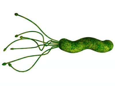 Žaludeční vřed bakterie