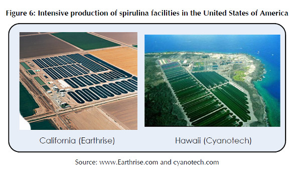 Takto se pěstuje Spirulina v USA
