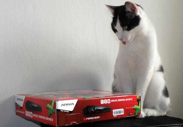 Jsou Arivy jen pro kočku, nebo je to jinak?