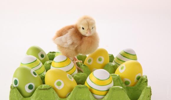 Uvařit vejce aby neprasklo je docela věda...