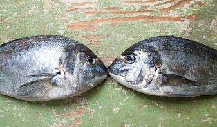 Vitalia.cz: Zčerstvělá ryba nemá s čerstvou nic společného