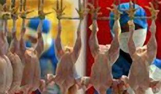 Místo kuřete kupujete jen živočišnou bílkovinu