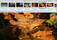 FastStone Image Viewer - fullscreen