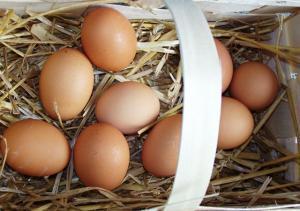 Zdrava-vyziva-bio-vejce