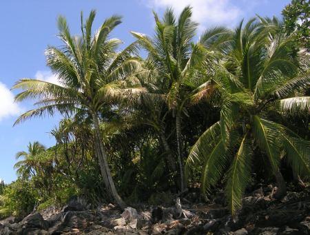 Ostrov 1