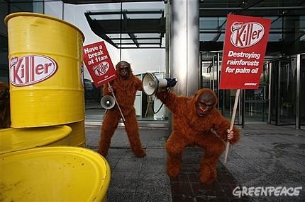 Nestle orangutani