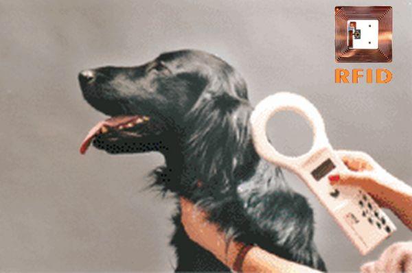 Pes a RFID