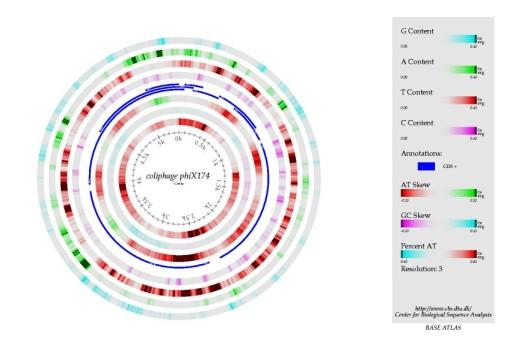 Bakterifág Phx174