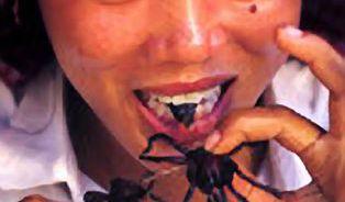 Stát se hmyzožravcem