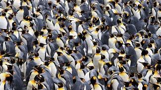 Linux je největším softwarovým projektem světa: 21milionů řádků, 4000vývojářů ze 440firem
