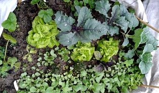 Komunitní zahrady: Pražák zahradníkem