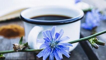 Vitalia.cz: Domácí kafe zčekanky: chutná, léčí a je zadarmo