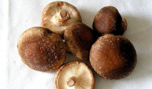 Houba shitake (houževnatec jedlý, šiitake, shiitake)