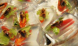 Dobře chutná jen dobře živený hmyz