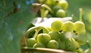 Seriál o víně: Vinařská turistika