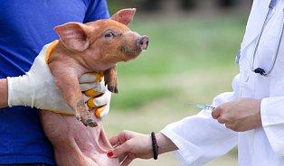 Antibiotika uzvířat máme pod kontrolou.Zatím