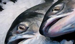 Co si kupujeme s mraženými rybami? Půl ryby, půl vody