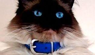 Felinoterapie: Léčba kočkou