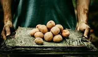 Vitalia.cz: Malé brambory: kdysi se zaorávaly, dnes jsou hitem