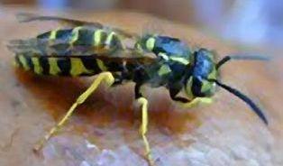 Co dělat, aby na vás nelezl bodavý hmyz?