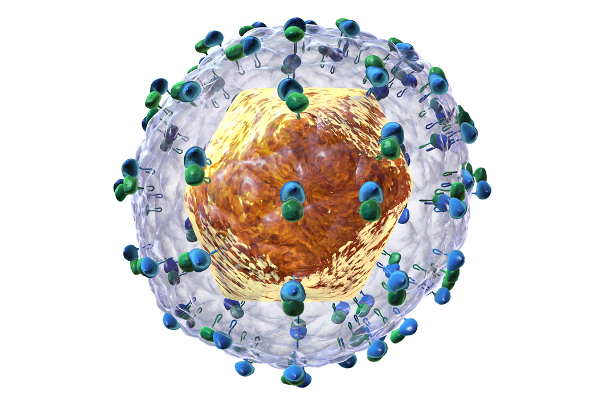 Přírodovědecká fakulta UK: Virus hepatitidy typu C tvoří proteinové částice. Uvnitř částice je ukrytá virová genetická informace neboli virová RNA.