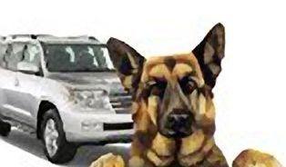 Pes versus džíp – kdo škodí víc?