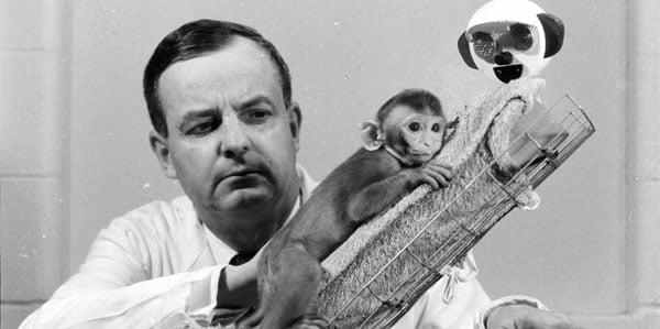 Americký psycholog Harry Harlow proslul zejména pokusy s opicemi