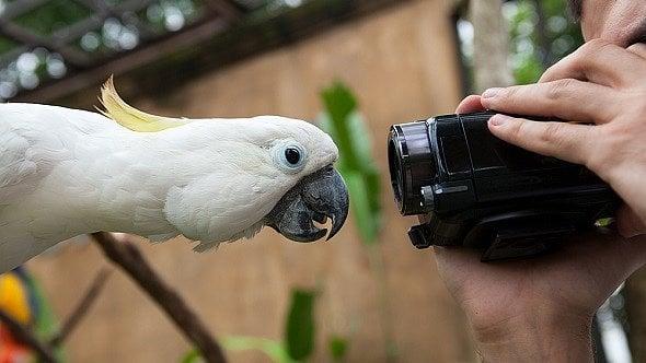 Perličky vpojištění zvířat: podvodníci se najdou imezi chovateli papoušků