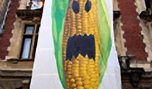 Evropou se šíří zákazy pěstování GMO plodin. Připojí se i Česko?