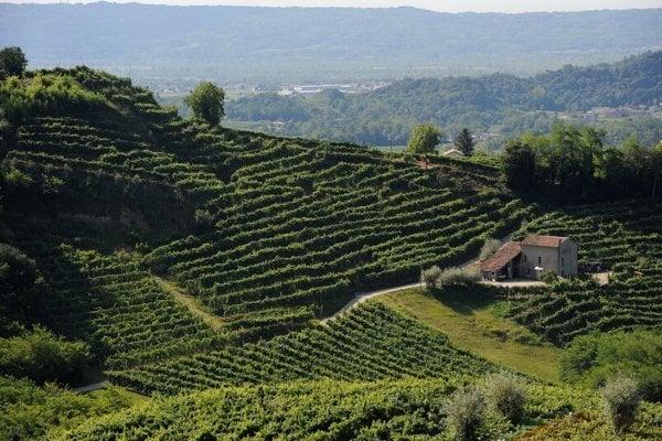 Nejryzejší prosecca pocházejí z okolí městečka Valdobbiadene a jsou označena zkratkou DOCG