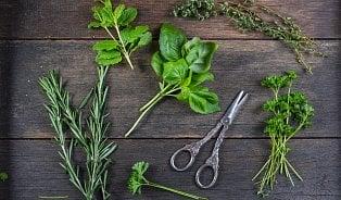Jak využít bylinky vkuchyni: Bazalku a petržel nikdy nevaříme