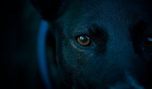 Peklo vduši: Deprese je černý pes…