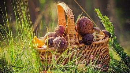 Vitalia.cz: Jak zpracovat houby, když jich najdete hodně