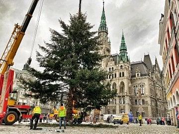 Vánoční strom - Douglaska tisolistá na libereckém náměstí