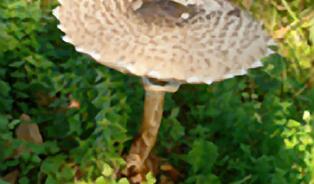 I před Vánoci můžete chodit na houby