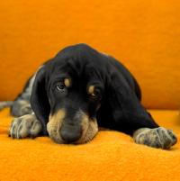Můžete dostat podporu za venčení vlastního psa?
