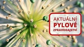120na80.cz: Pylová sezóna nejsilnějších alergenů končí