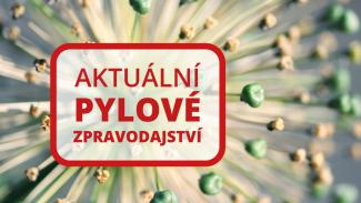 120na80.cz: Začátek hlavní sezóny pelyňku je tu