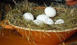 Vitalia.cz: Dovoz polských vajec stoupl za tři roky o 740 %