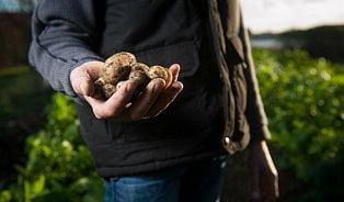 Vitalia.cz: Je potřeba vrátit bramborám jejich chuť