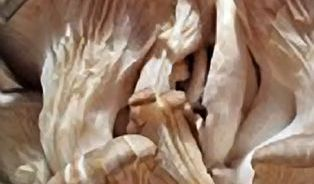 Léčivé houby koupíte vlékárně ibylinkářství