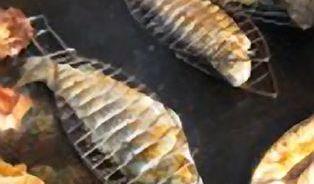 Rybí orgie na výlovu Rožmberka