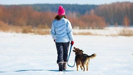 Vitalia.cz: Venčení psů zútulku coby terapie