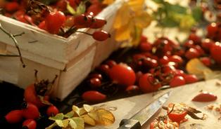 Šípkové recepty se špetkou nostalgie